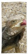 Gray Iguana Eating Lettuce With His Pink Tongue Sticking Out Beach Towel