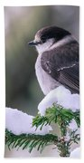 Gray Jay Beach Towel