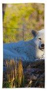 Gray Wolf Beach Sheet