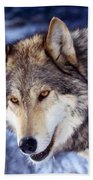 Gray Wolf Beach Sheet