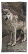 Gray Wolf On A Rock Beach Towel