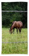 Grazing Horses - Cades Cove - Great Smoky Mountains Tennessee Beach Towel