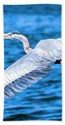 Great Blue Heron Flight Beach Towel