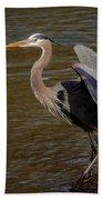 Great Blue Heron - Flooded Creek Beach Towel