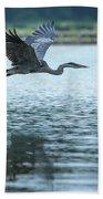 Great Blue Heron Flying Beach Towel