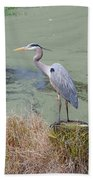 Great Blue Heron Near Pond Beach Towel
