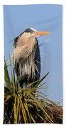 Great Blue Heron On Nest In A Palm Tree Beach Sheet