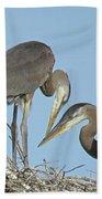 Great Blue Heron Pair Beach Towel