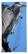 Great Blue Heron Perched Beach Towel