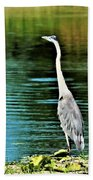 Great Blue Heron Standing Tall Beach Towel