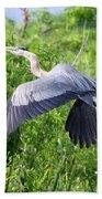 Great Blue Heron Takeoff Beach Towel