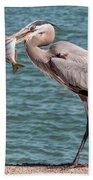 Great Blue Heron Walking With Fish #2 Beach Towel