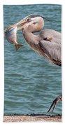 Great Blue Heron Walking With Fish #3 Beach Towel