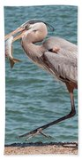 Great Blue Heron Walking With Fish #4 Beach Towel