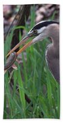 Great Blue Heron With His Catch Beach Towel