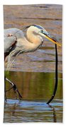 Great Blue Heron Wrestles A Snake Beach Towel