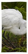 Great Egret And Chick Beach Towel