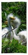 Great Egret Chicks 1 Beach Towel