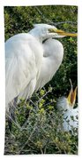 Great Egret Mom And Babies Beach Towel