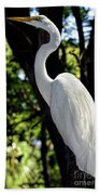 Great Egret Up Close Beach Towel