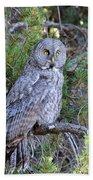 Great Grey Owl Beach Towel