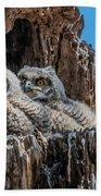 Great Horned Owlets Beach Towel