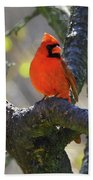 Great  Perch Male Northern Cardinal Beach Towel
