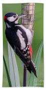 Great Spotted Woodpecker 1  Beach Towel