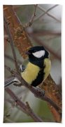 Great Tit Male Beach Towel