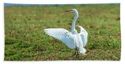 Great White Egret Ahoy Beach Towel