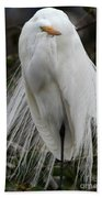 Great White Egret Windblown Beach Towel