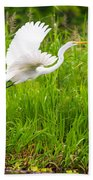 Great White Heron Takeoff Beach Towel