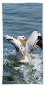 Great White Pelican In Flight Beach Towel
