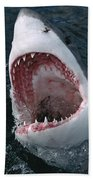 Great White Shark Jaws Beach Towel by Mike Parry