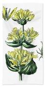 great yellow gentian, Gentiana lutea Beach Towel