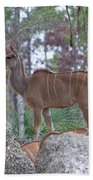 Greater Kudu Female - Rdw002756 Beach Towel