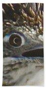 Greater Roadrunner Portrait Beach Towel