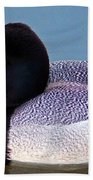 Greater Scaup  Beach Towel