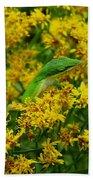 Green Anole Hiding In Golden Rod Beach Towel