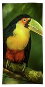 Green-billed Toucan Perched On Branch In Jungle Beach Towel