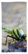 Green Dragonfly Beach Towel