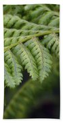 Green Fern Beach Towel