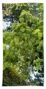 Green Fizalis Plant Beach Sheet