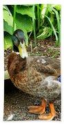 Green Head Mallard Duck 2 Beach Towel