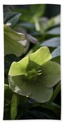 Green Hellebore Squared Beach Towel