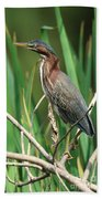 Green Heron At The Governor's Palace Gardens Beach Towel