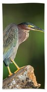 Green Heron Butorides Virescens Beach Towel