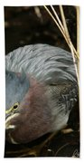 Green Heron Hunting Beach Towel