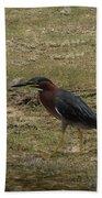 Green Heron In Central Texas Beach Towel