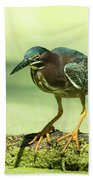 Green Heron In Green Algae Beach Towel